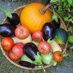 Agroecology bonanzas
